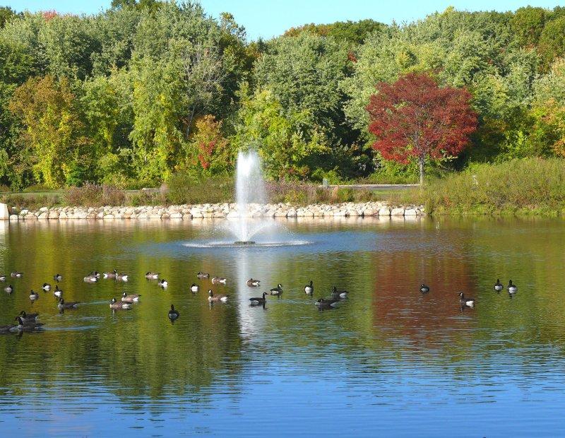 fall fountain