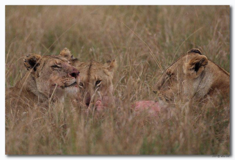 Kenia_00530.jpg