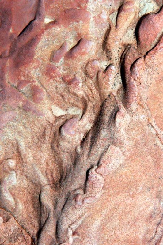 Moenkopi Fossil