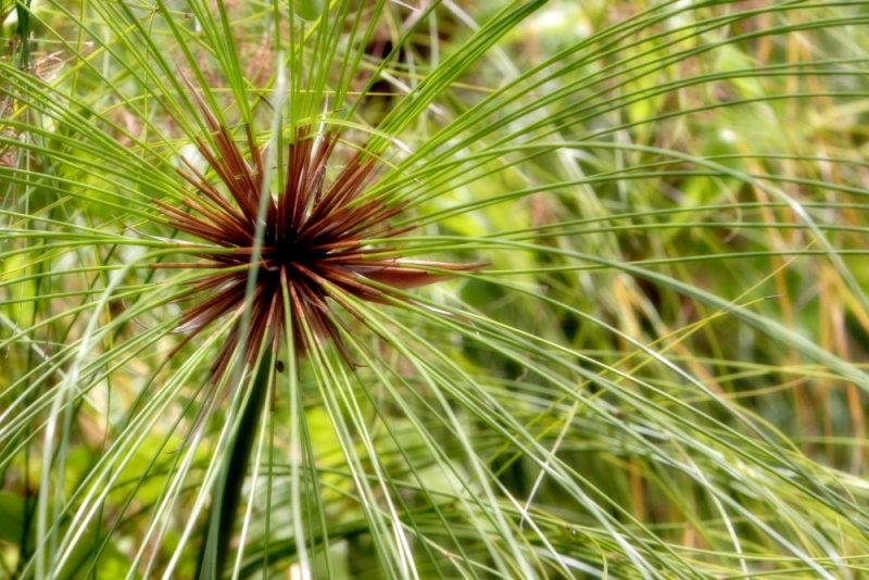 Saipan Plant