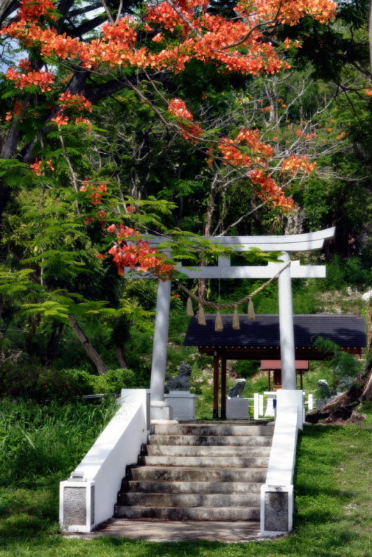 Flame Tree and Temple