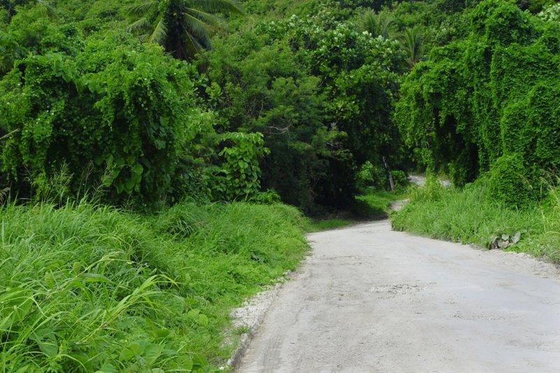 Coral Road