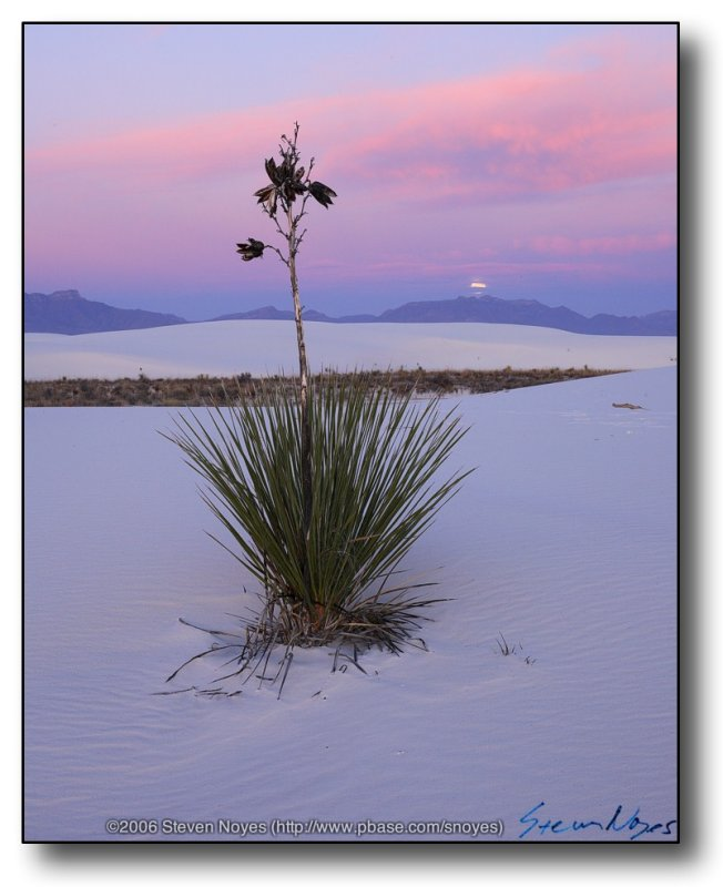 White Sands : Moonset on the Yucca