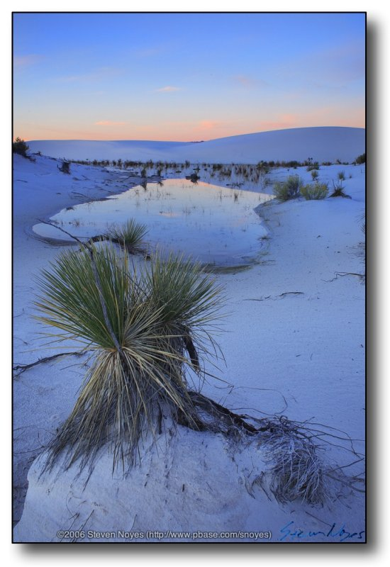 White Sands : Yuccas Pond