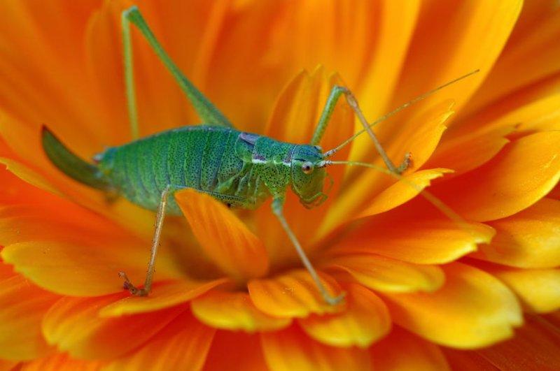 4635-Cricket-2-web.jpg