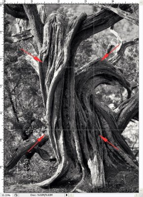 Seeing Shapes -- Cedar Bonsai B&W