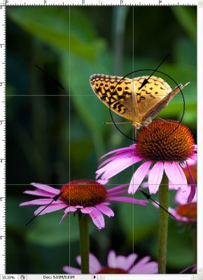 Negative Space -- Butterfly on Cone Flower