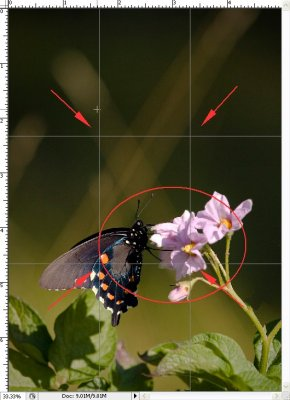 Bokeh and Pattern -- Swallowtail on Purple Flower