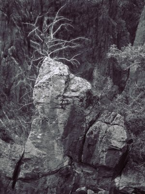 Rocks and Tree Gunnison Canyon BW