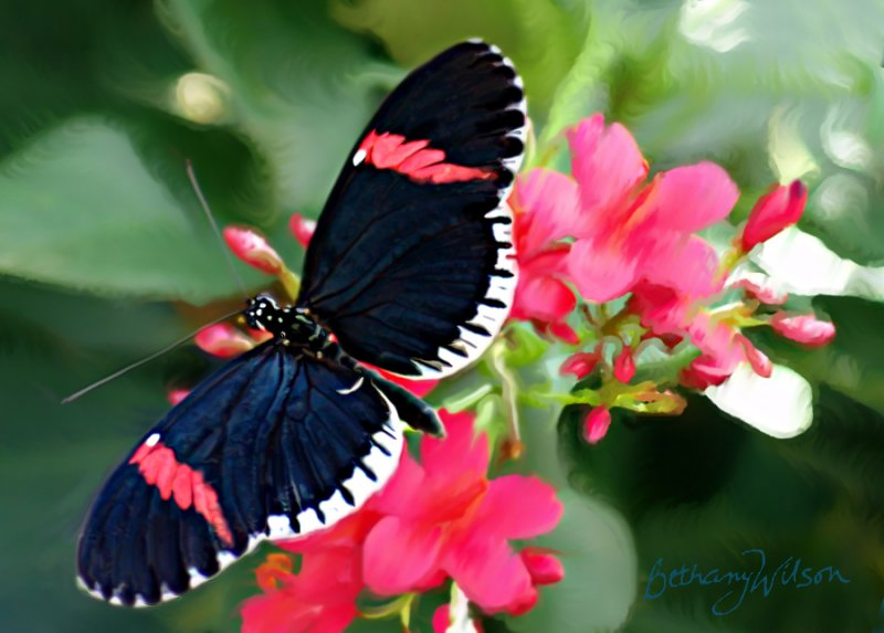 too gorgeous butterfly