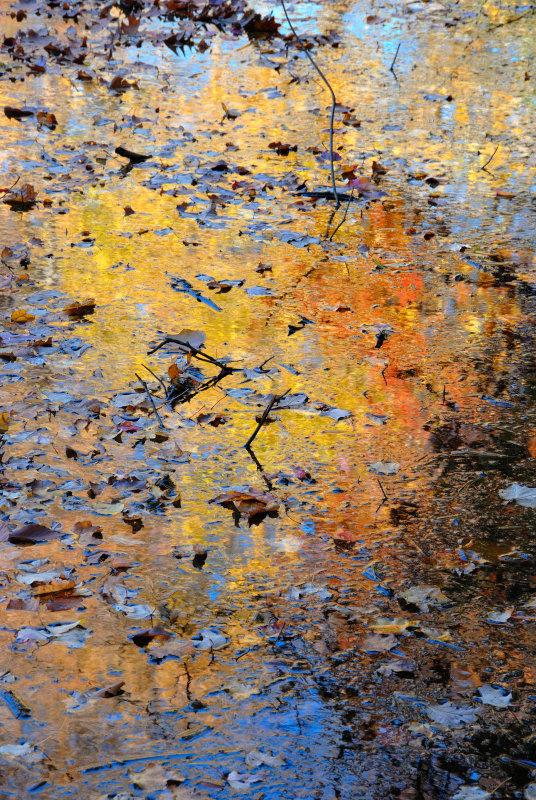 Bailey Arboretum - Pond Reflection