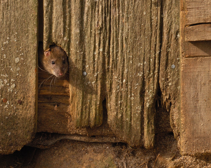 Lookin Out My Back Door