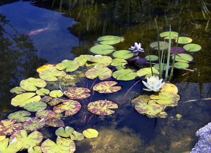 Flower Pond.jpg
