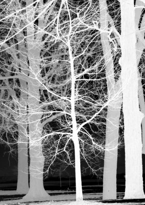 trees_inverted_01.jpg