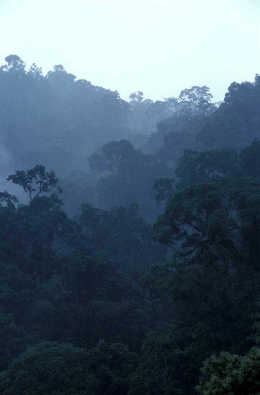 Danum Valley Forest- Sabah.