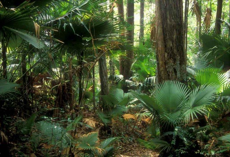 Endau Rompin-Palm forest.