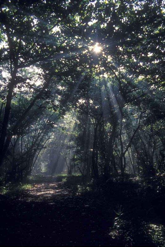 Kuala Selangor Nature Park-mangrove