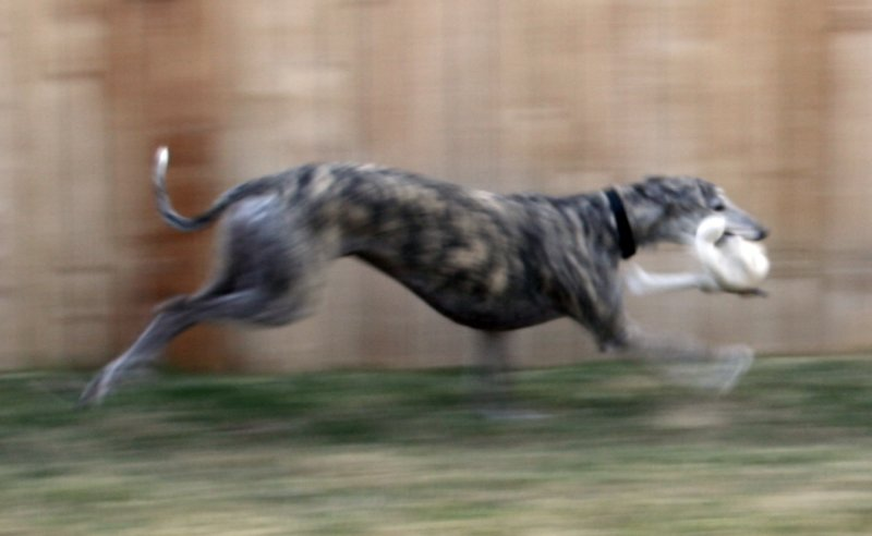 Action photos of romy