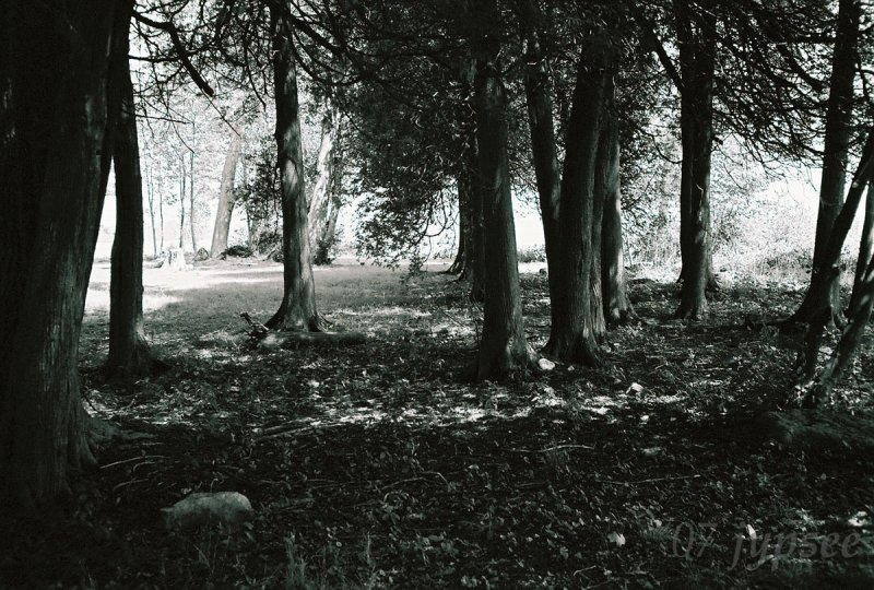 trees in black and white; a new life in film