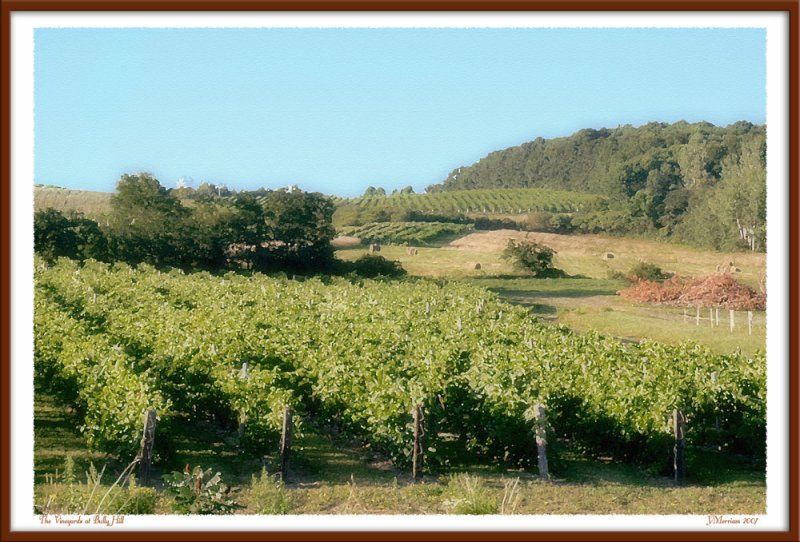 The Vineyards at Bully Hill