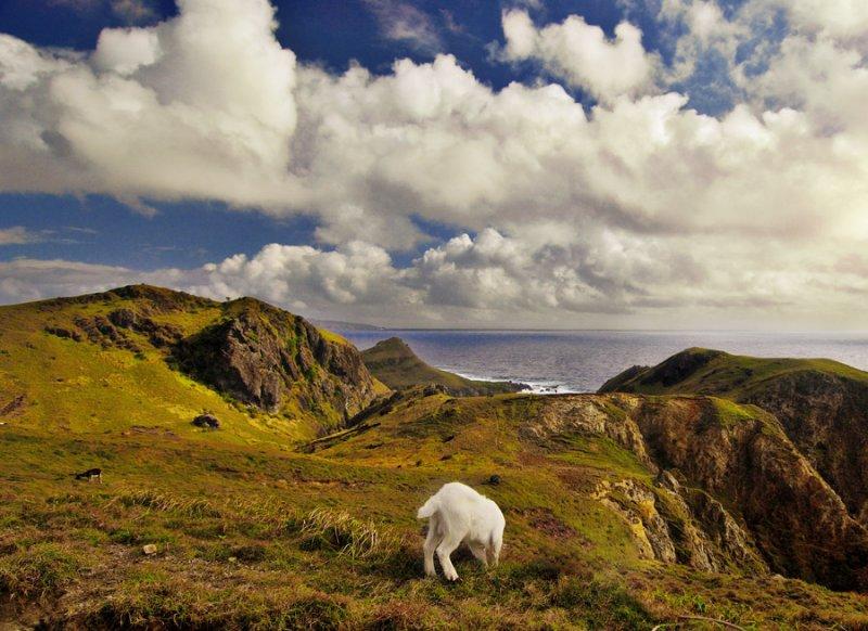 Goats View