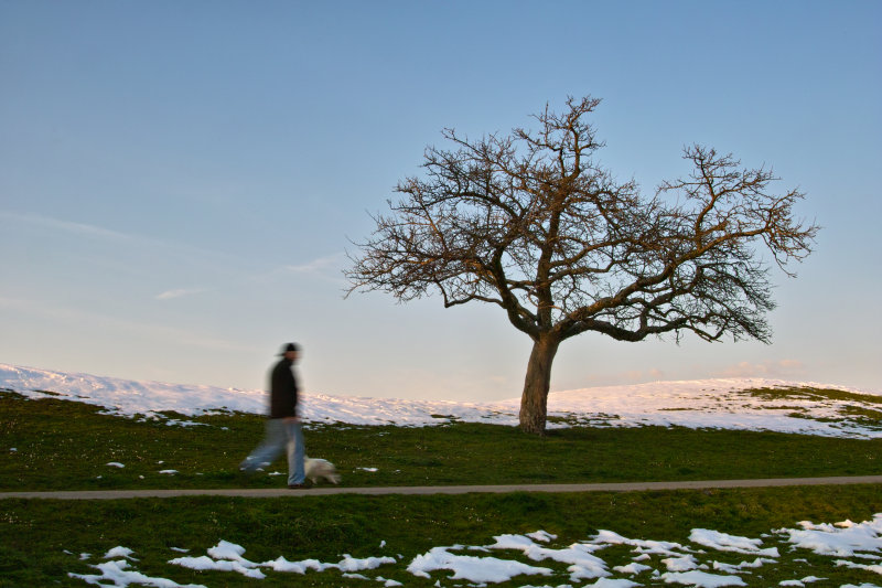 Man and Dog Greet Nodding Tree