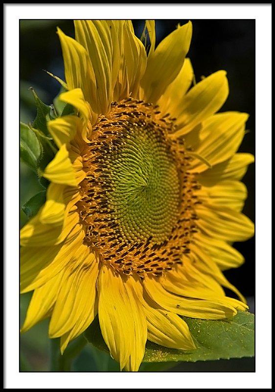 aug 13 side flower