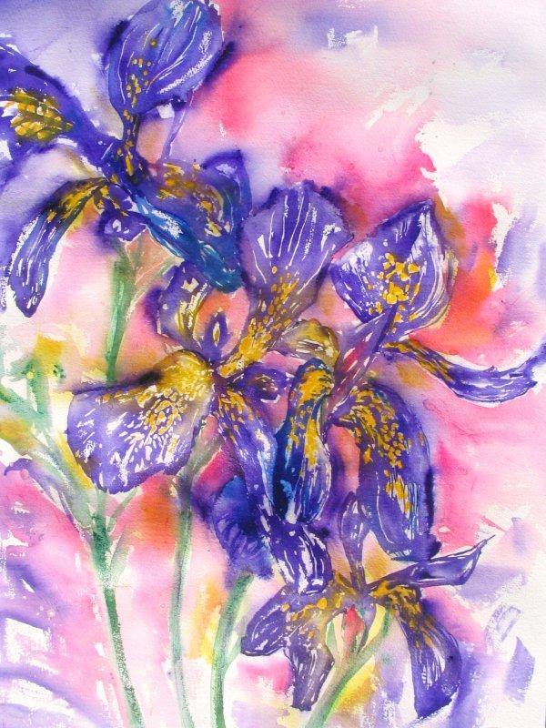 Iris £60