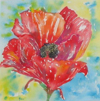 Single Poppy £195 inc mount & frame