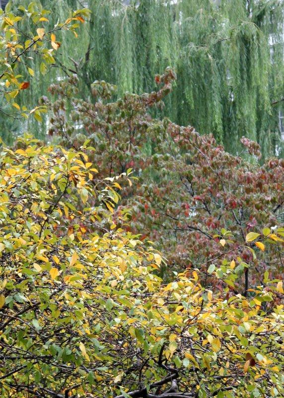 Crab Apple, Dogwood & Willow Trees