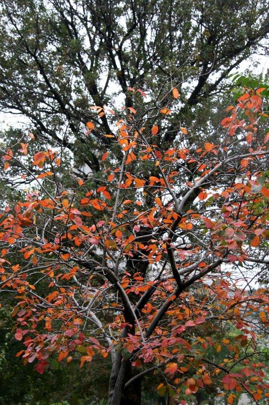 Prunus & Oak Tree Foliage