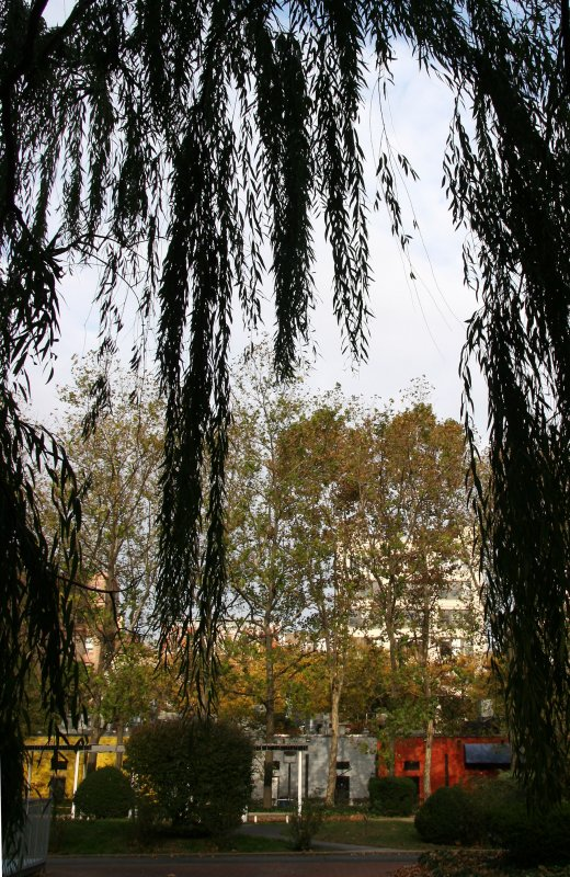 Garden View - Sycamore & Locust Trees Framed with Willow Branches