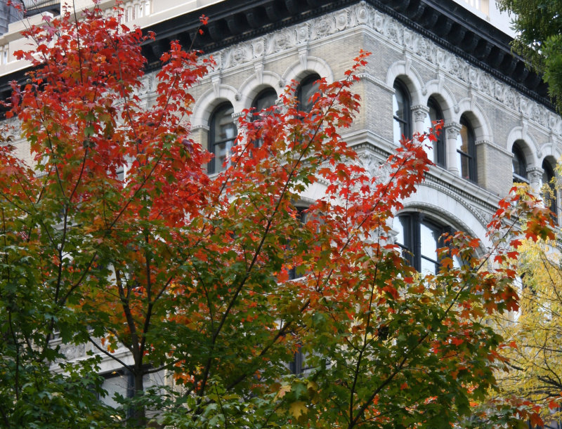 Maple Tree & NYU Education Building