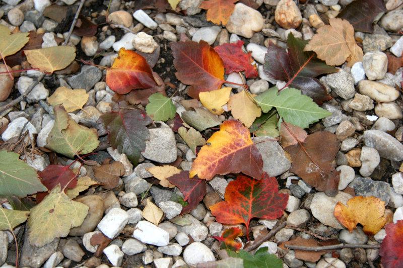 Foliage on Stone Ground Cover