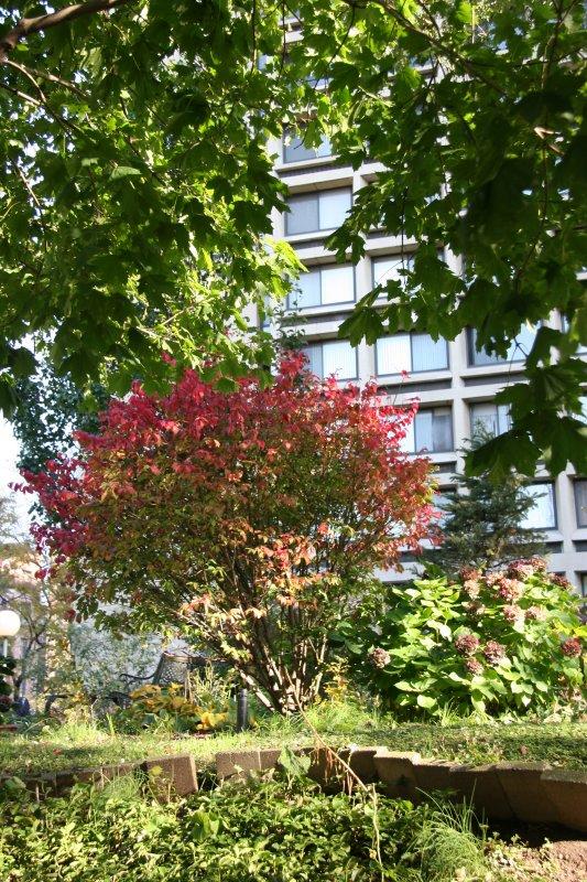 Garden View - Burning Bush