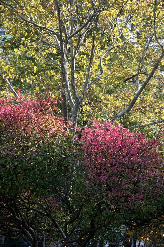 Burning Bush & Sycamore Tree