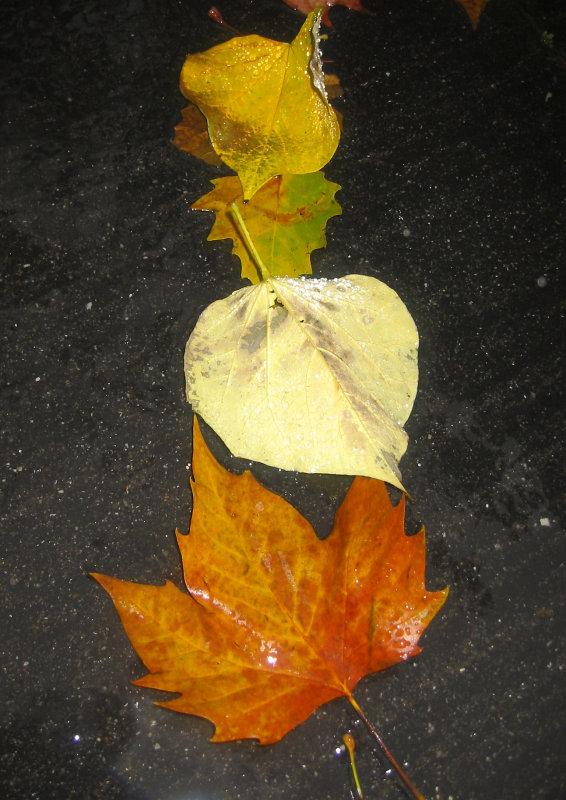 Loose Cercis & Sycamore Foliage