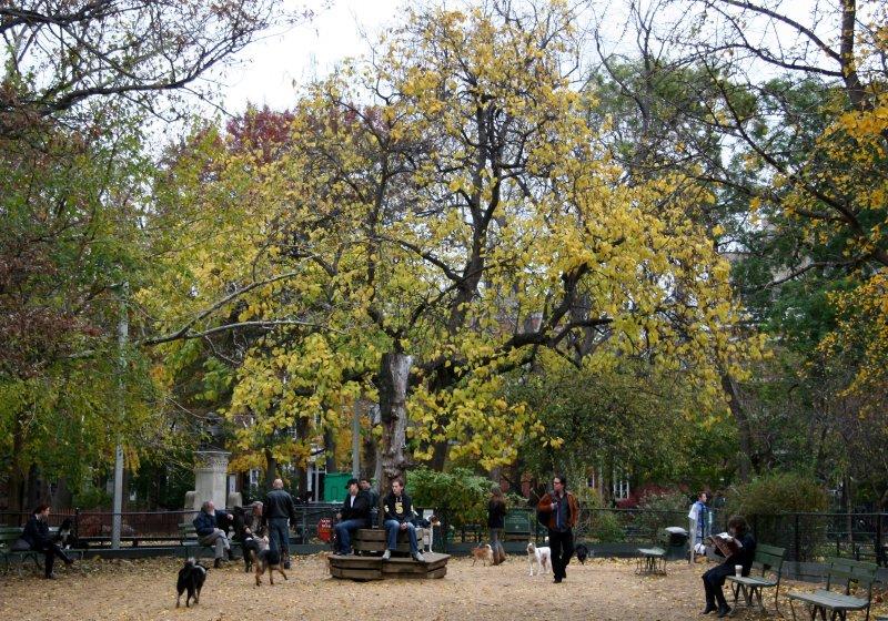 Dog Run & Catalpa Tree