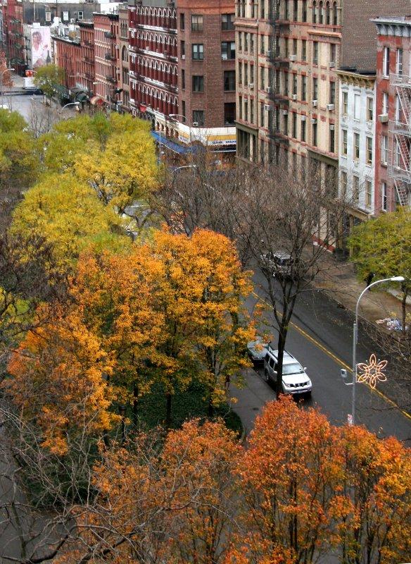 Late Fall - Pear & Scholar Tree Foliage