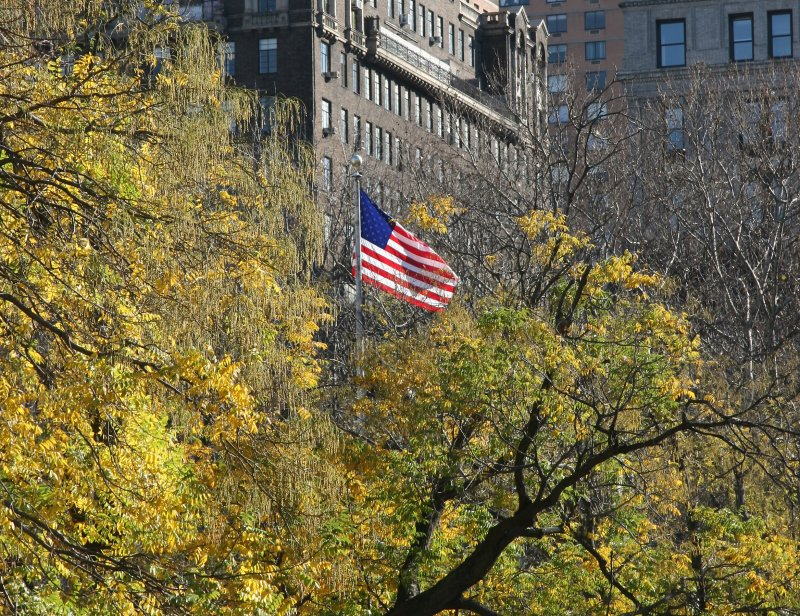 Scholar Tree Foliage & U.S. Flag