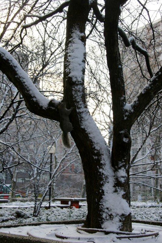 First Snow of the Season - Crab Apple Tree