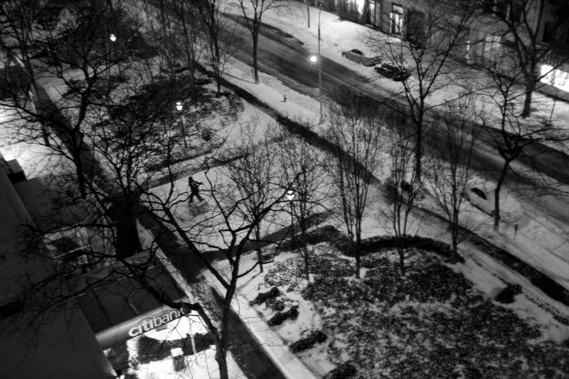 Night Snow - Garden View
