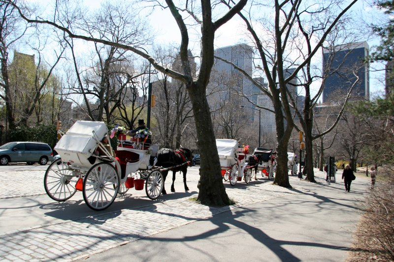 Horse Drawn Carriages - Southeast Horizon