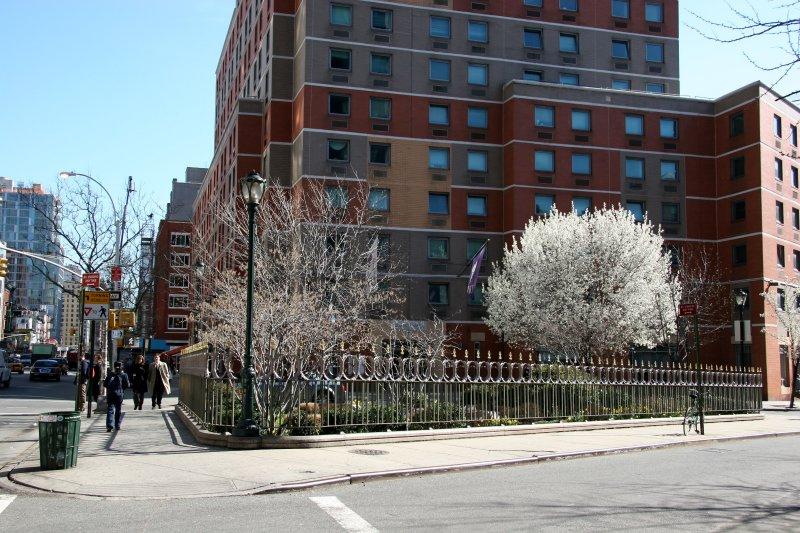 NYU Dormitory , Vest Pocket Park - Pear Tree in Bloom