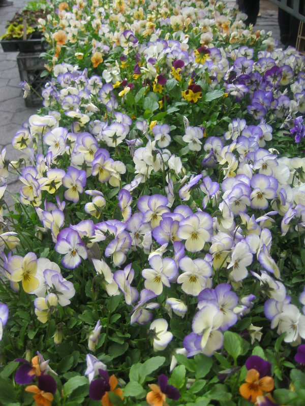 Farmers Market at Tompkins Park - Pansies for Sale