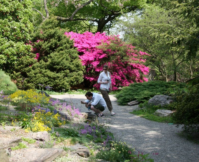 Azaleas - Rock Garden