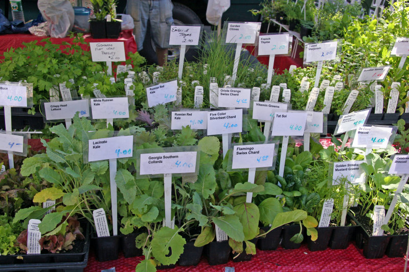 Farmers Market - Herbs for Sale