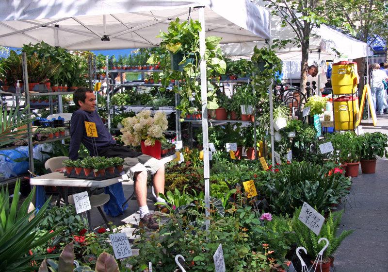 Farmers Market - Garden Plants