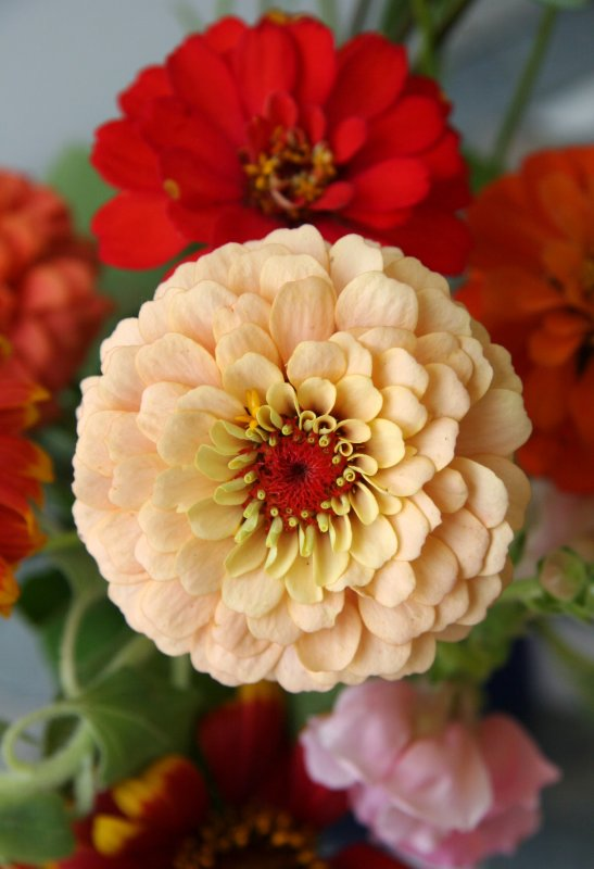 Home Grown Garden Bouquet - Zinnias