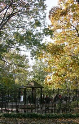 Golden Oak Tree Foliage & Childrens Playground